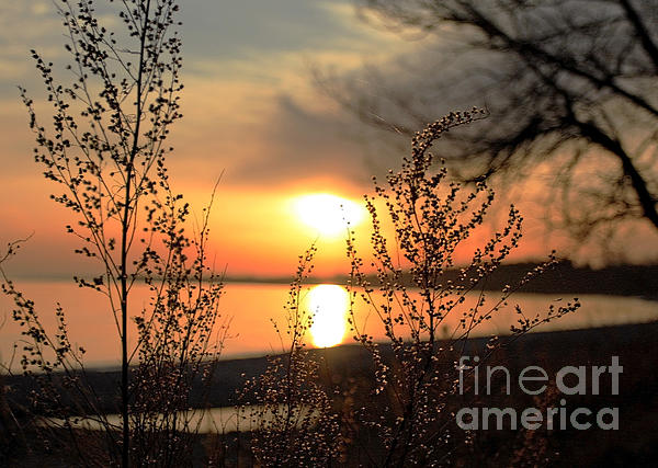 Inspired Nature Photography Fine Art Photography - A Golden Moment in Time