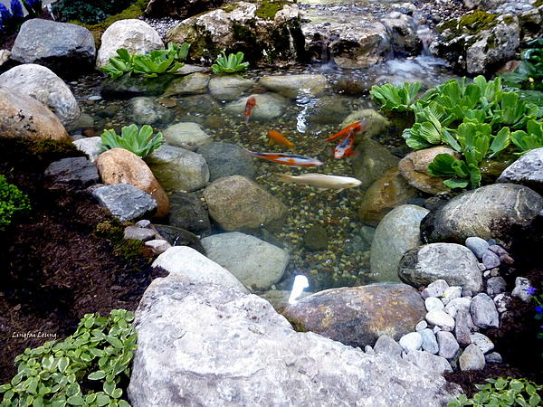 Lingfai Leung - A Koi Pond For Outdoor Garden