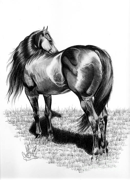 Cheryl Poland - A Study of the Thoroughbred Hindquarters in Bic Pen