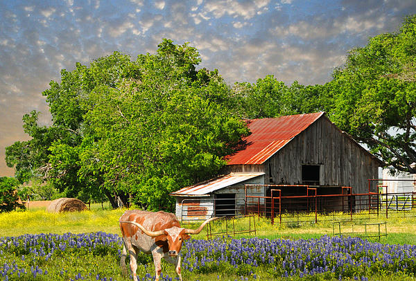 Lynn Bauer - A Taste of Texas