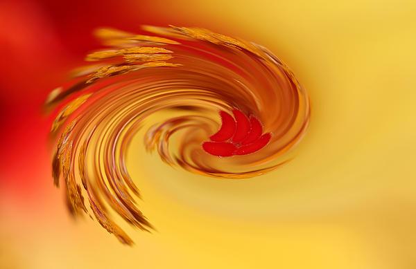 Debbie Oppermann - Abstract Swirl Hibiscus Flower