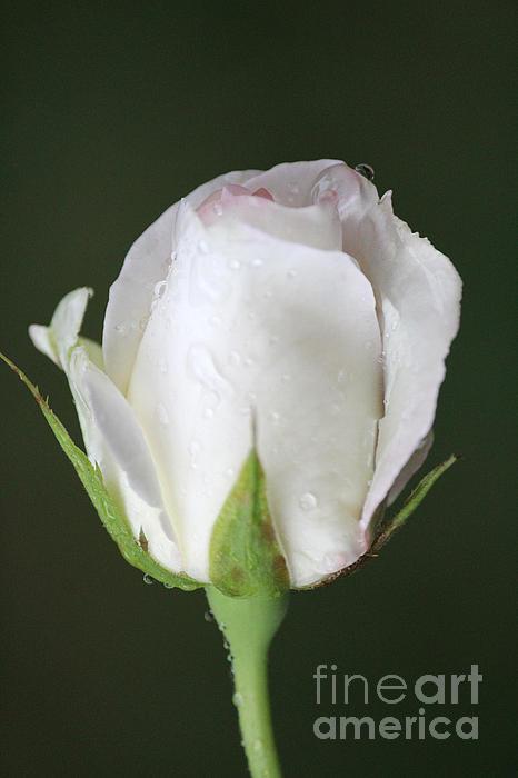 The Art Of Marilyn Ridoutt-Greene - Alone in the rain