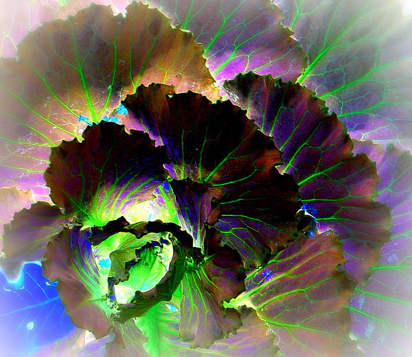 Antonia Citrino - Astonishing Cabbage PD
