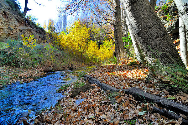 Guido Montanes Castillo - Autumn river