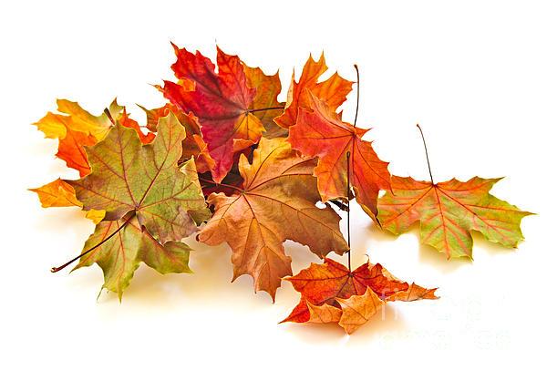 Elena Elisseeva - Autumn leaves