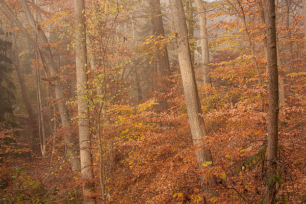 Patrice Zinck - Autumn Mist