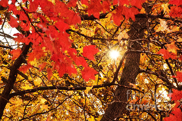 Andee Design - Autumn Sunrise Painterly