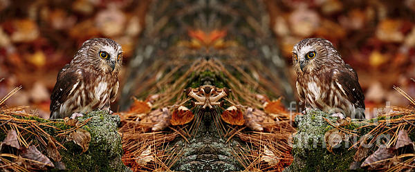 Inspired Nature Photography Fine Art Photography - Autumn Treasure- Saw Whet in Forest
