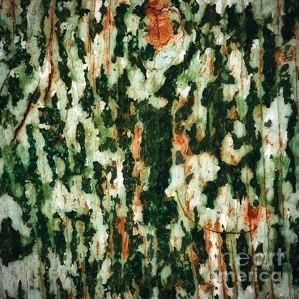 Lee Craig - Babbling Bark Abstract