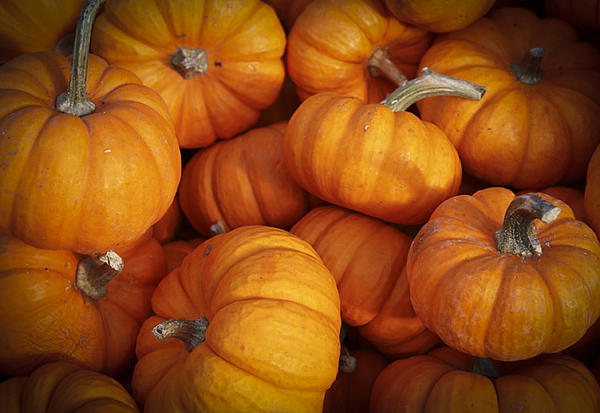 Patrice Zinck - Baby Pumpkins