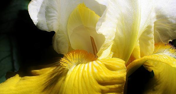 Bruce Bley - Beauty in the Garden