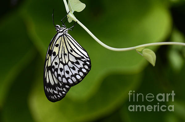 Bob Christopher - Beauty Of Nature Butterfly 1
