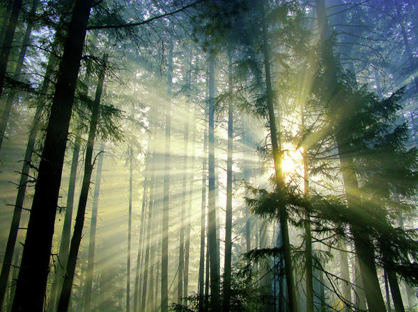 Diane Schuster - Behold The Light In The Fall Forest