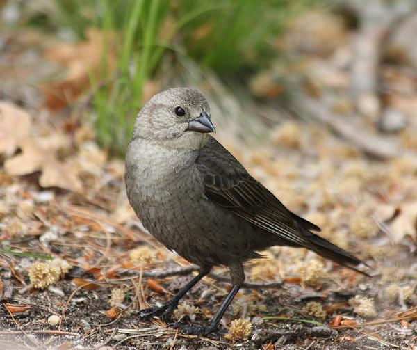 John Telfer - Bird Looking Over His Shoulder