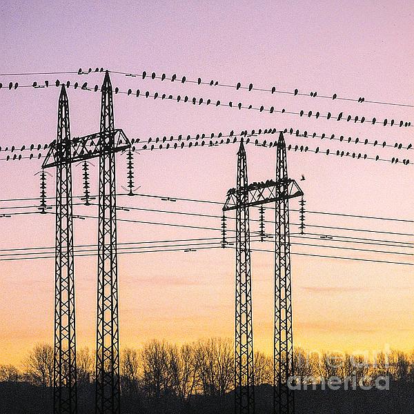 Kim Lessel - Birds on Power Lines