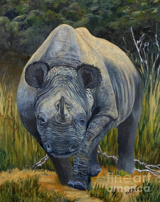 Caroline Street - Black Rhino