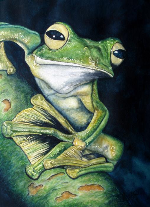Joey Nash - Boreal Flyer Tree Frog
