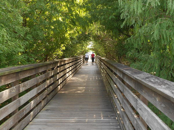 Sheila Silverstein - Bridge at Green Cay