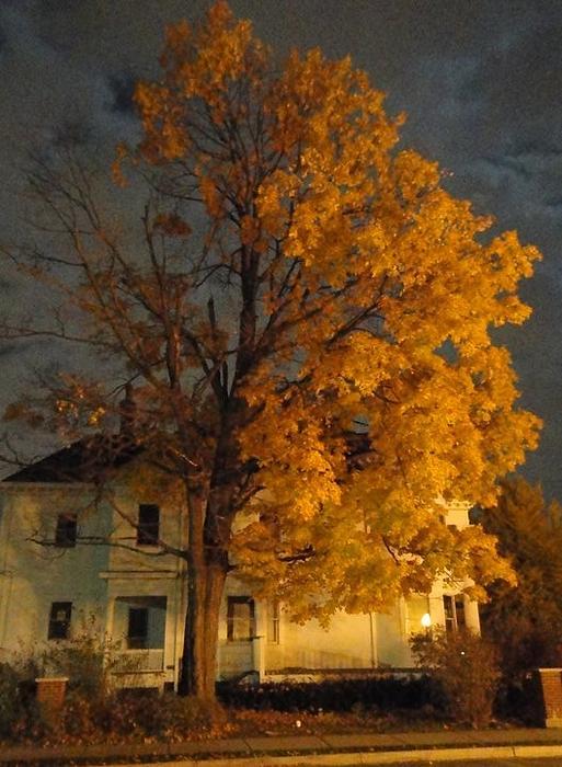 Guy Ricketts - Burning Leaves at Night