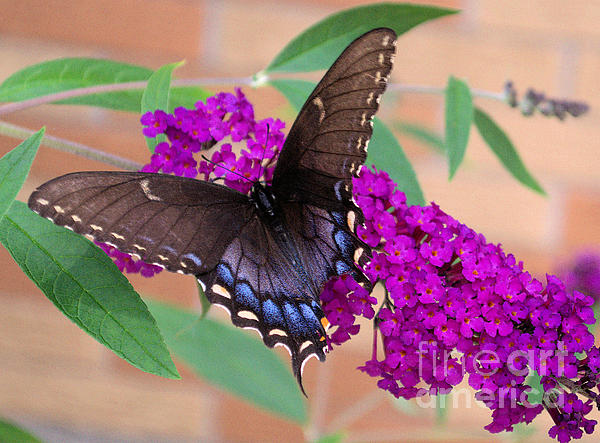 Luther Fine Art - Butterfly And Friend