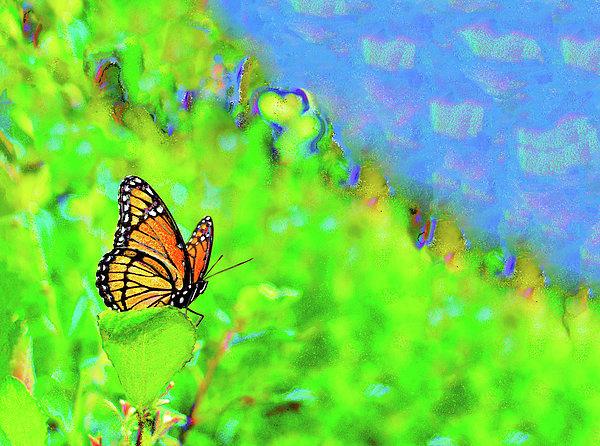 Marianne Campolongo - Butterfly Fantasy