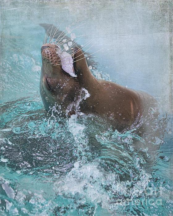 TN Fairey - California Sea Lion - Houston Zoo