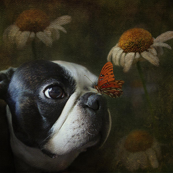 Kathleen Holley - Constant Companion