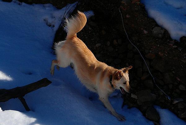 Gilad Riv - Dog In The Snow