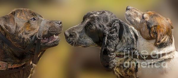 Linsey Williams - Doggie Gossip