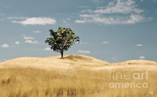 Scott Pellegrin - Dream Tree