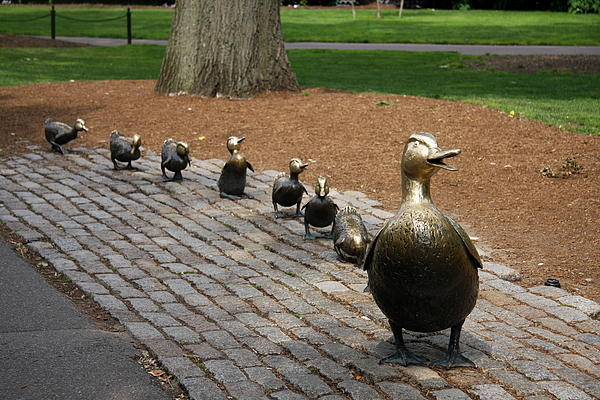 Christiane Schulze Art And Photography - Ducklings