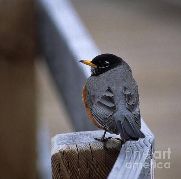Sharon Elliott - Early Bird