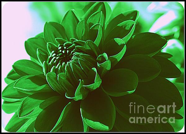 Dora Sofia Caputo Photographic Art and Design - Emerald Green Beauty