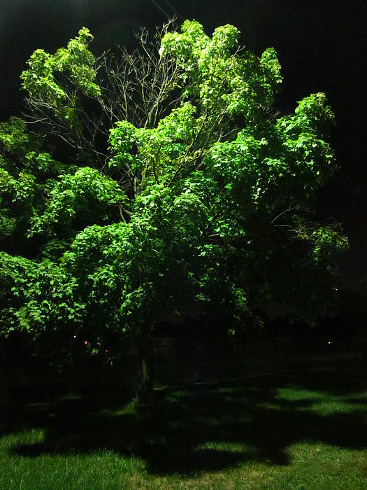 Guy Ricketts - Emerald Leaves at Night