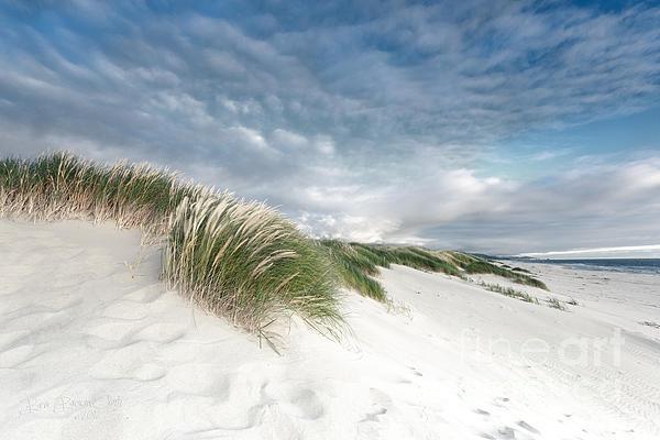 Beve Brown-Clark Photography - Endless Summer