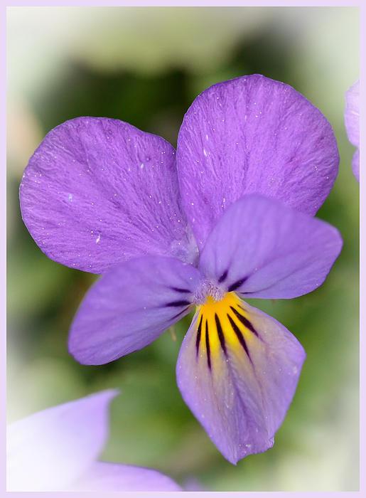 Kerri Farley - Flowers That Smile