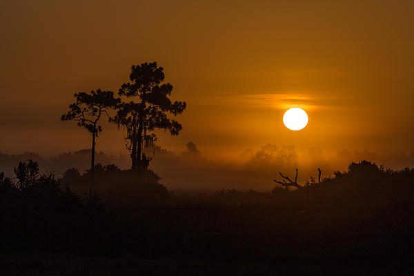 Ron Caimano - Foggy Sunrise