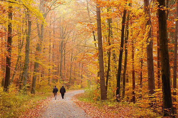 Matthias Hauser - Forest in fall - trees with beautiful autumn colors