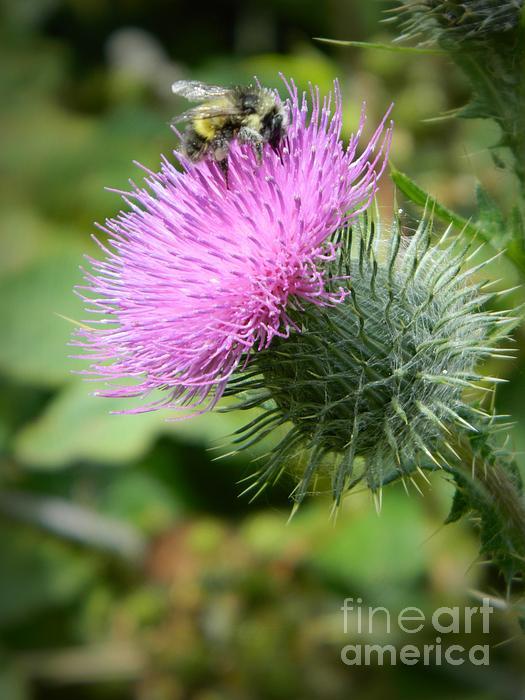 Chalet Roome-Rigdon - Gathering Pollen