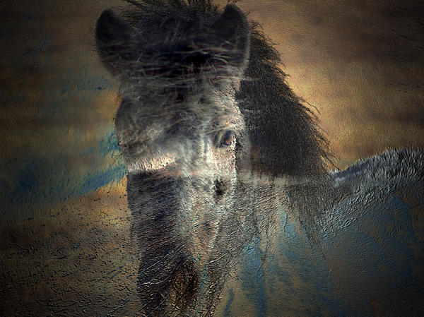 Irma BACKELANT GALLERIES - Ghost Pony