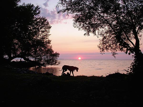 Aimee L Maher Photography and Art Visit ALMGallerydotcom - Great Dane Sunset