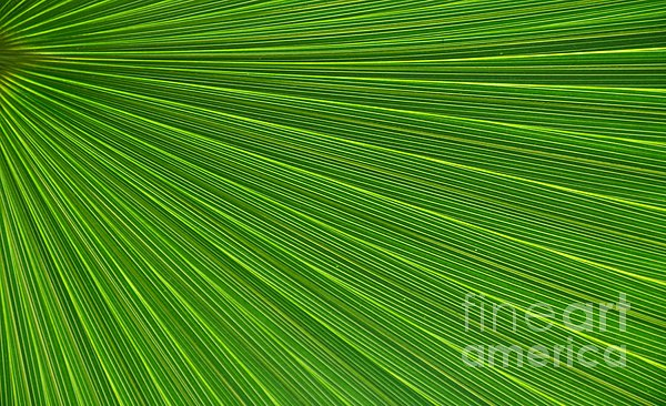 Kathleen Struckle - Green Palm Abstract