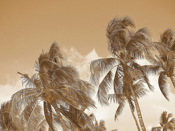 Athala Carole Bruckner - Hawaiian Breeze