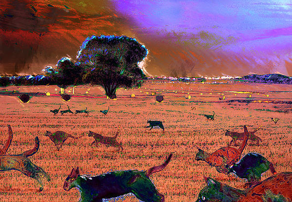 Carl Rolfe - Herding Cats