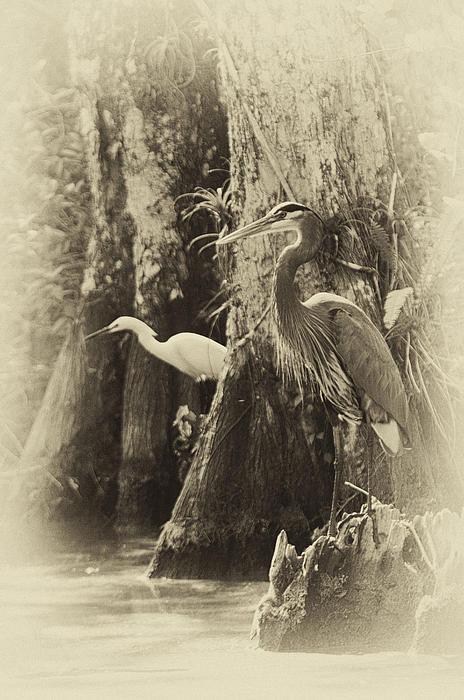 Bruce Bain - Heron and Egret