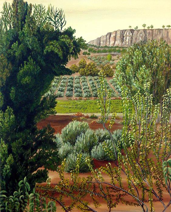 Angeles M Pomata - High Mountain Olive Trees