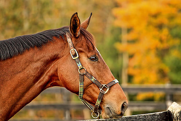 Geraldine Scull - Horse Pasture in Fall