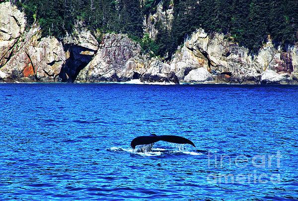 Thomas R Fletcher - Humpback Whale Alaska