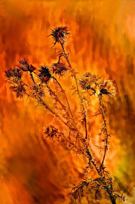 Steve Harrington - In Praise of Weeds