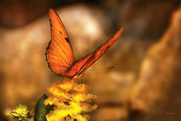 Mike Savad - Insect - Butterfly - Just a bit of orange